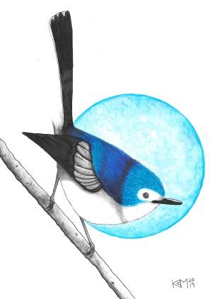 This bird is blue.